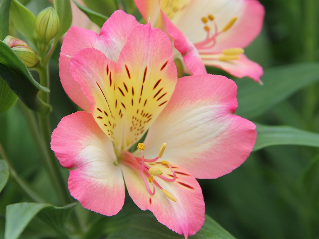 Hilverda De Boer - Flowers