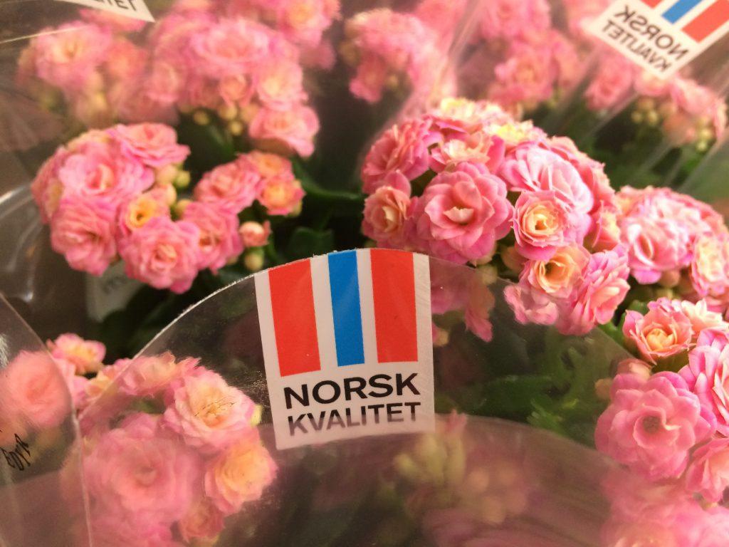 Hilverda De Boer Norge - Alesund